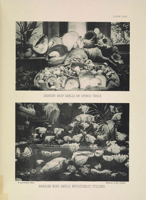 <a href='http://www.biodiversitylibrary.org/' target='_blank'>Image from: Biodiversity Heritage Library</a>